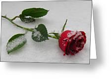 Richard's  Rose Greeting Card