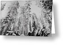 Snowy Sequoias At Calaveras Big Tree State Park Black And White 3 Greeting Card