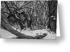 Snowy Tree Bench In Black And White Greeting Card