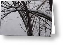 Snowy Tree II Greeting Card
