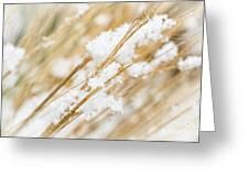 Snowy Weed Greeting Card