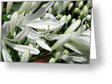 Snowy White Beauty. 7 Greeting Card