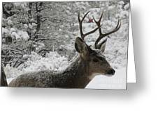 Snowy Young Buck Greeting Card