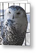 Snowy.owl Greeting Card
