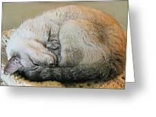 Snugglepuss Greeting Card