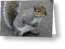 So.... Got Nuts? Greeting Card
