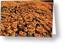 So Many Flowers To Pick From........ Greeting Card