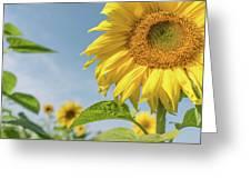 Soaking Up The Sun Greeting Card