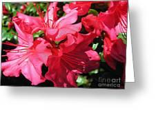 Shine On Azalea Greeting Card