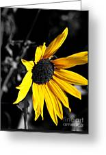 Soaking Up The Yellow Sunshine Greeting Card