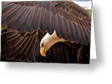 Soar Like An Eagle Greeting Card