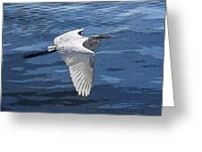 Soaring Egret Greeting Card