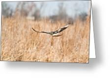 Soaring Hawk Over Field Greeting Card by Douglas Barnett