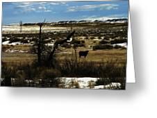 Soaring In Montana Greeting Card