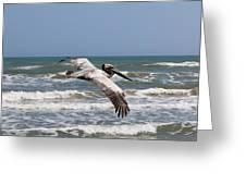 Soaring Pelican  Greeting Card