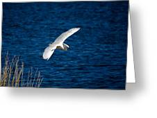 Soaring Snowy Egret  Greeting Card