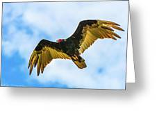 Soaring Vulture Greeting Card