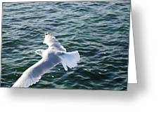 Soaring Waters Greeting Card