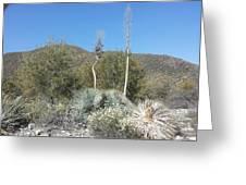 Socal Yucca Greeting Card