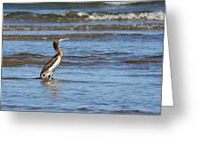 Socotra Cormorant Greeting Card