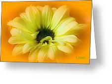 Sodden Petals   Greeting Card