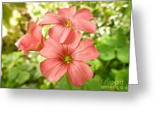 Soft And Peachy Smiles Greeting Card