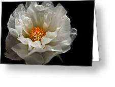Soft And Pure Greeting Card