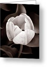 Soft And Sepia Tulip Greeting Card