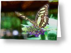 Soft Butterfly Greeting Card