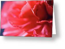 Soft Carnation Petals Greeting Card