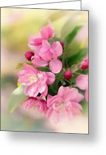 Soft Apple Blossom Greeting Card