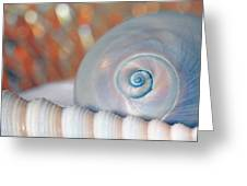 Soft Colored Shells Greeting Card