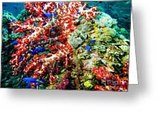 Soft Coral In Truk Greeting Card