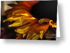 Soft Flame Greeting Card