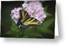 Soft Focus Tiger Swallowtail Greeting Card