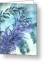 Soft Grasses Greeting Card
