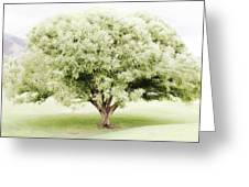 Soft Green Tree Greeting Card