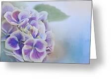 Soft Hydrangeas On Blue Greeting Card