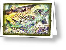 Soft Iguana Greeting Card
