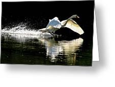 Soft Landing  Greeting Card