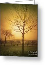 Soft Light In Summerland Greeting Card