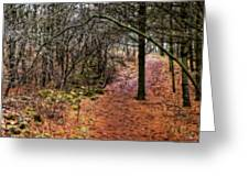 Soft Light In The Woods Greeting Card