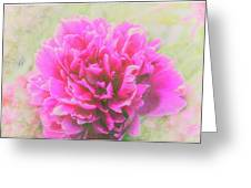 Soft Peony Greeting Card
