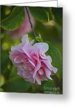 Soft Pink Camellia Greeting Card