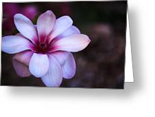 Soft Pink Magnolia Greeting Card