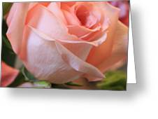 Soft Pink Rose Greeting Card