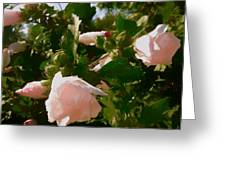 Soft Pink Rose Of Sharon Greeting Card