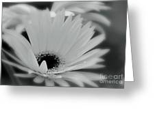 Soft Spring Greeting Card