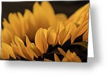 Soft Summer Light Greeting Card