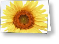 Soft Sunflower Greeting Card